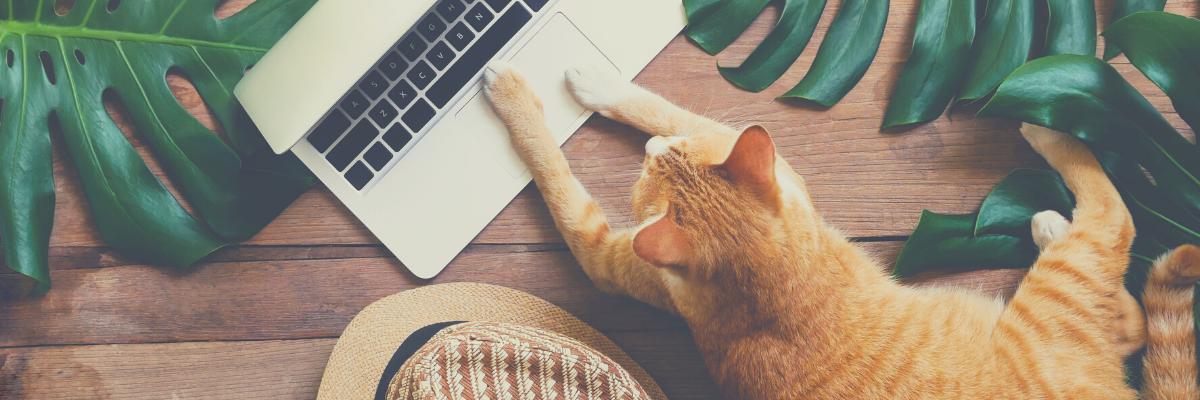 Office manager freelance ce qu'il faut savoir